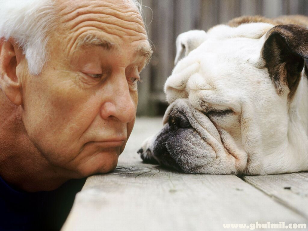 Best Dogs For Seniors - Elderly Man And His Dog
